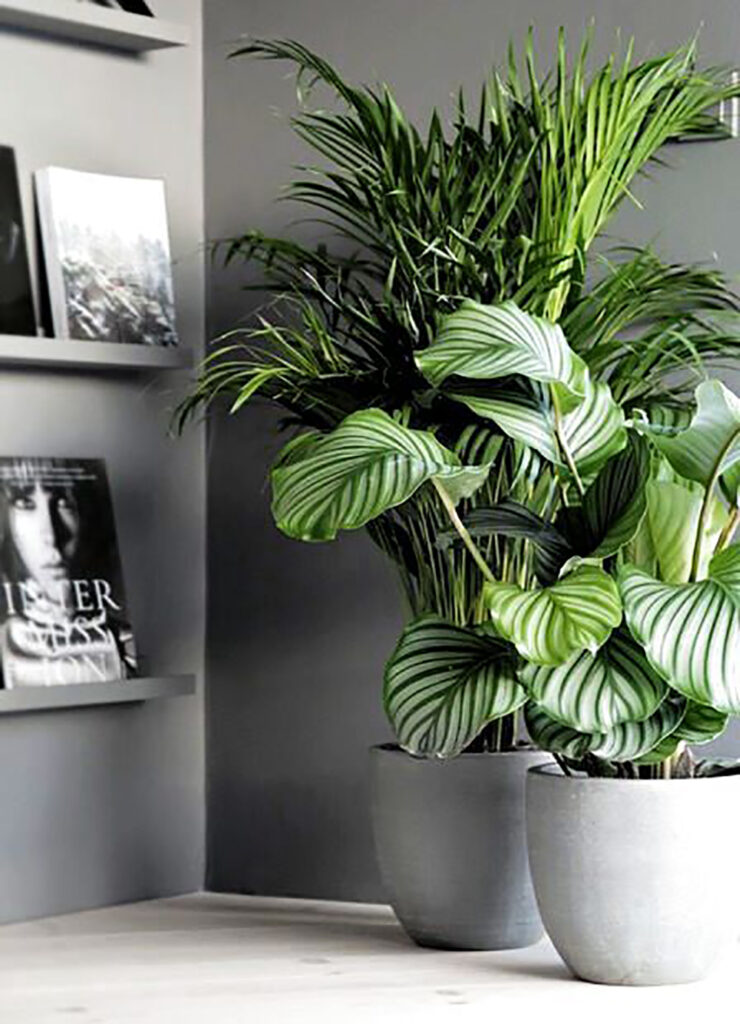 Två stora växter som står i ett hörn. En snygg ramhylla med detaljer syns till vänster.