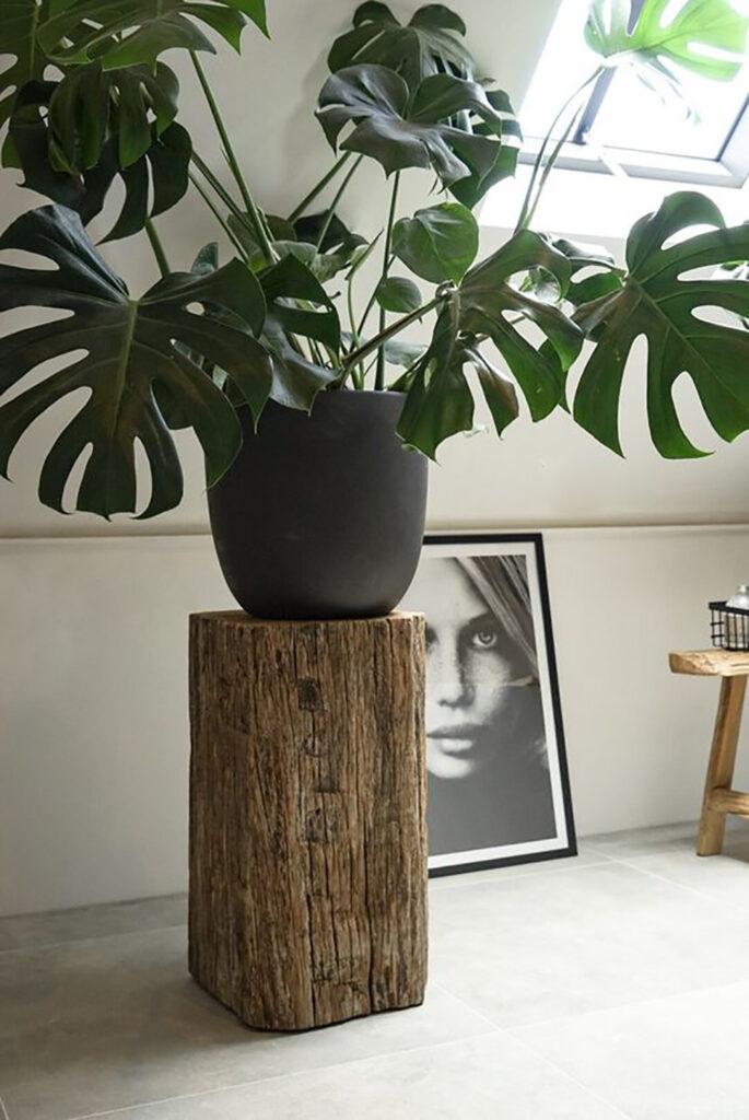 En maffig växt som står på en piedestal av trä. Inspiration till inredning.