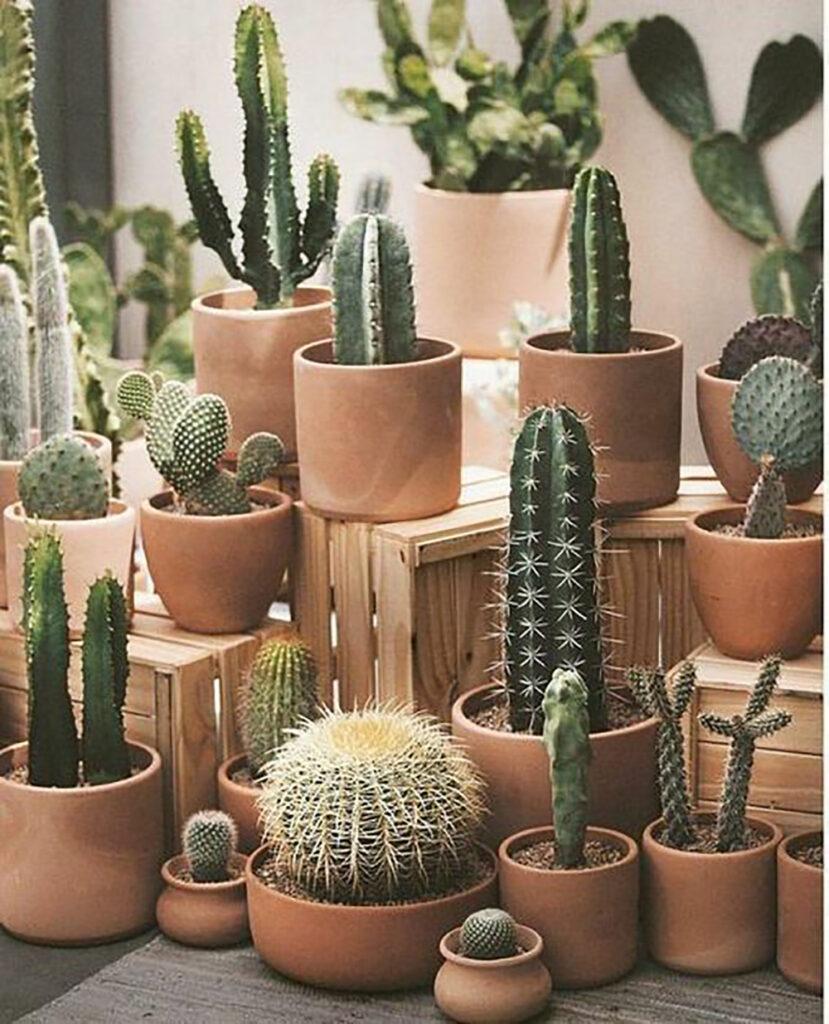 Flera olika sorters kaktusar och växter i krukor