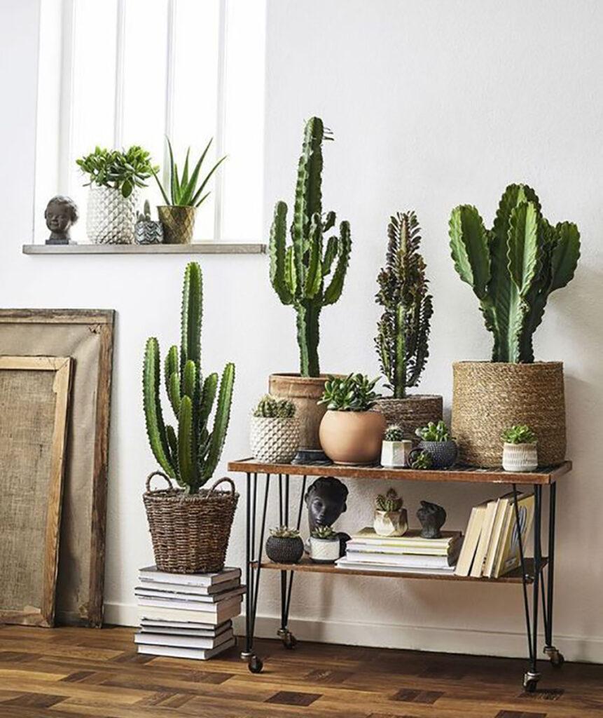 Kaktusar och växter som står i fönster på och på ett avlastningsbord. Inspirationsbild.